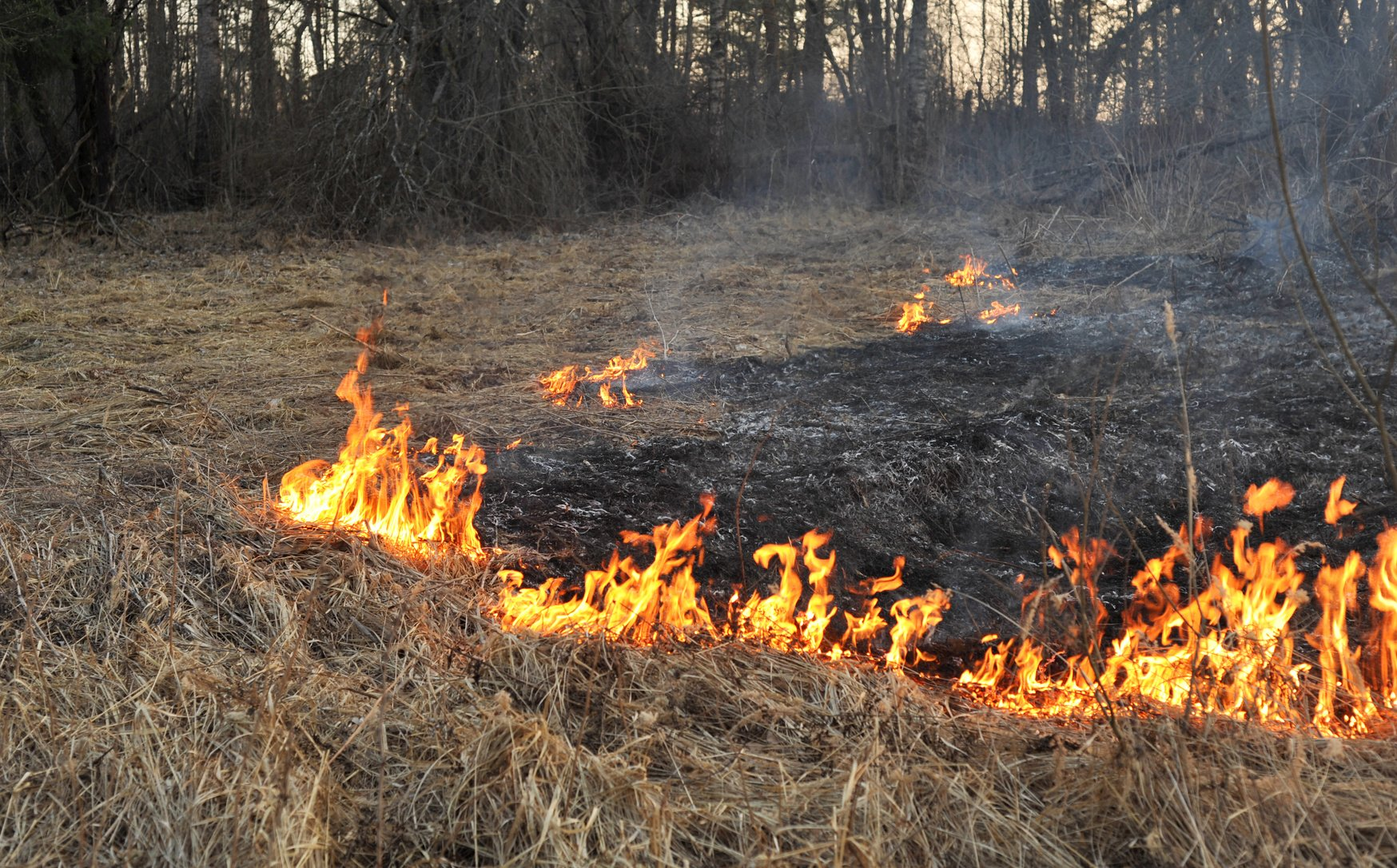 Wildfire Season Amp Home Safety