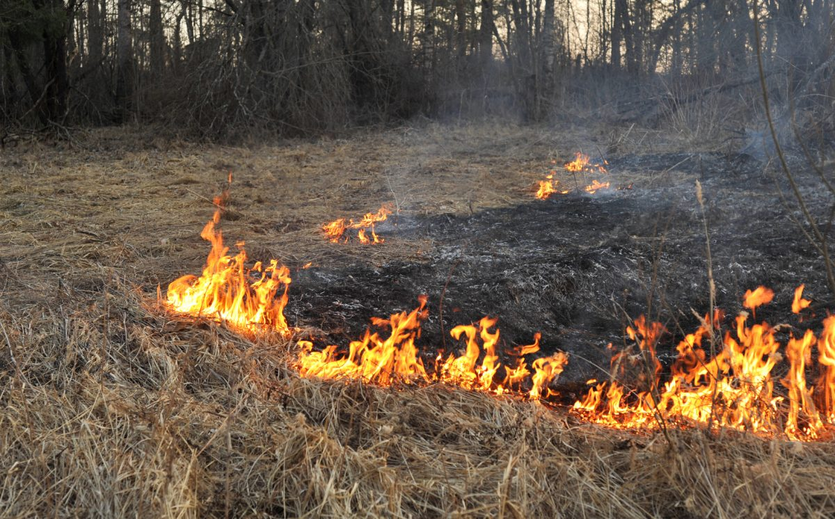 Wildfire Season & Home Safety