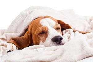 3 Tips for Your Dog to Live in Your Apartment